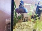 Un nouveau co locataire pour un aquariophile heureux 1557776222-img-20190513-191515