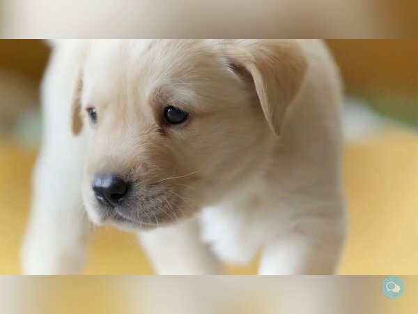 The Best Dogs Of BBC Earth - img