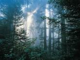 Forêt protégée