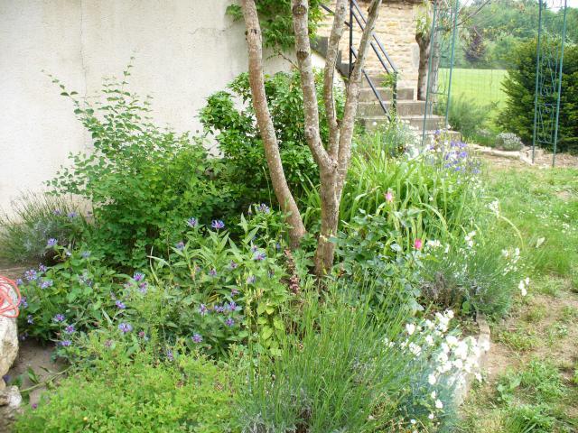 Venez vous promener dans mon jardin 278263P1040365