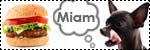 Forum Chihuahua : Mini Dog's Chihuahua 305123alimentation