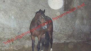 (54) Rocky de la Vallée TF - post désactivé en absence de nouvelles de la propriétaire 347618Doudou_.__221_