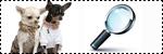 Forum Chihuahua : Mini Dog's Chihuahua 386718recherche