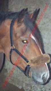 (54) Rocky de la Vallée TF - post désactivé en absence de nouvelles de la propriétaire 414315Doudou_.__220_