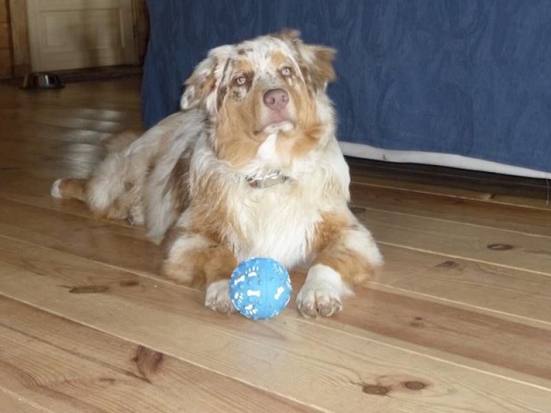 Week-end chez Dog Adventure dans le Morvan (58) 417074P1010544peduc
