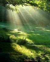 La forêt de la mémoire
