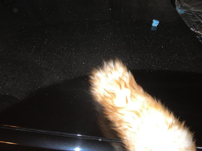 [BMW 530 d E39] Renaissance d'un Cosmos Schwarz Metallic 561004P1000747