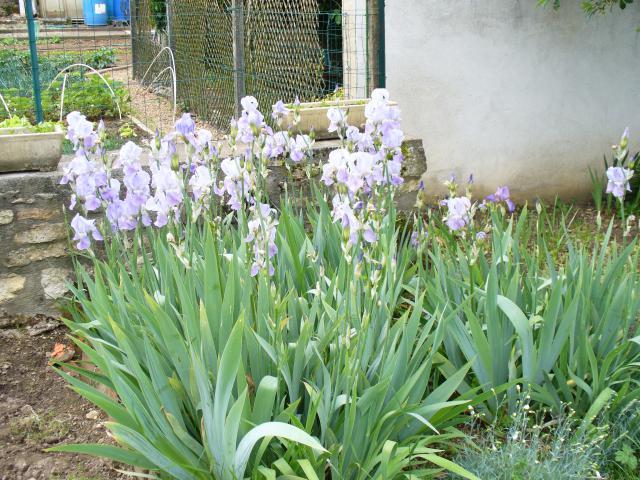 Venez vous promener dans mon jardin 58453P1040363