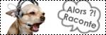 Forum Chihuahua : Mini Dog's Chihuahua 637971icone_bar