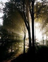 Les arbres du savoir