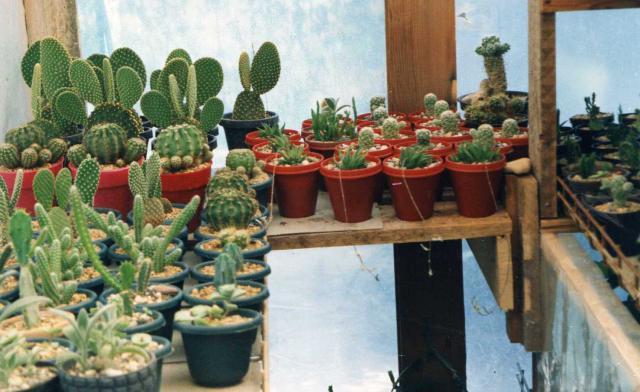 les cactus d'intérieur  684524img029