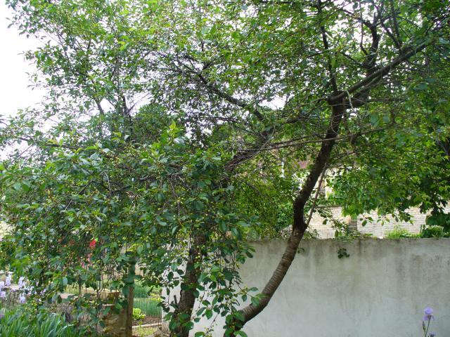 Venez vous promener dans mon jardin 754542P1040367