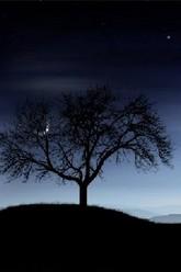 L'arbre solitaire