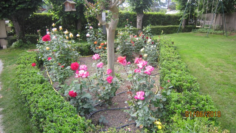 Mon jardin et moi... - Page 2 832139IMG_0932__800x600_
