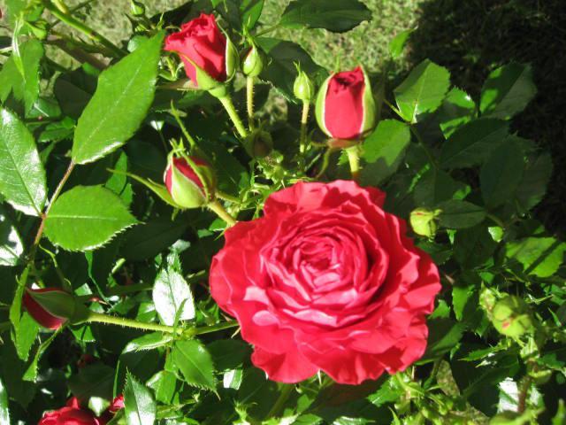 altera rosa 2010 862281cherry_girls