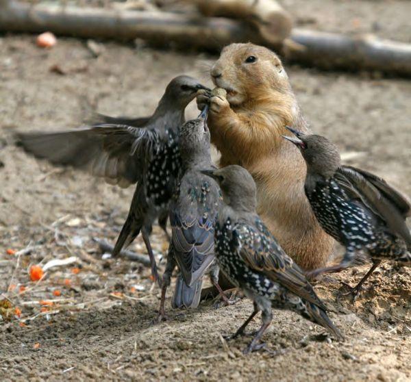 piques-assiette 918099Drole_d_oiseaux