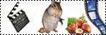 Forum Chihuahua : Mini Dog's Chihuahua 964942photos_et_videos_autre1