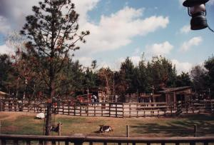 Vos vieilles photos du Resort - Page 15 Mini_140055O29