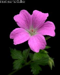 Fleurs Mini_2772322307873