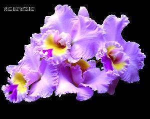 Fleurs Mini_901506r96j0lhr