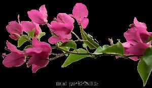 Fleurs Mini_9844254818987