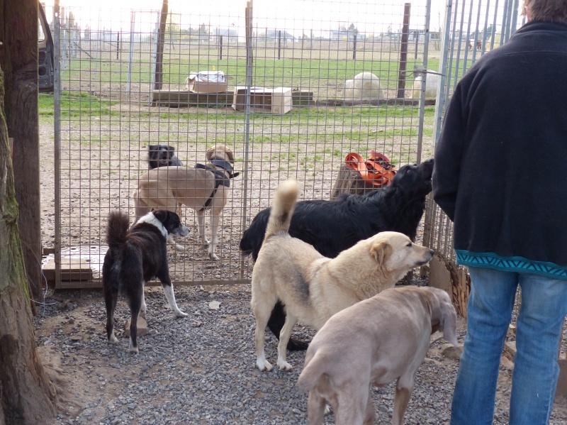 Pongo, chien des rues, né en 2009, très affectueux !! 115852P1080429