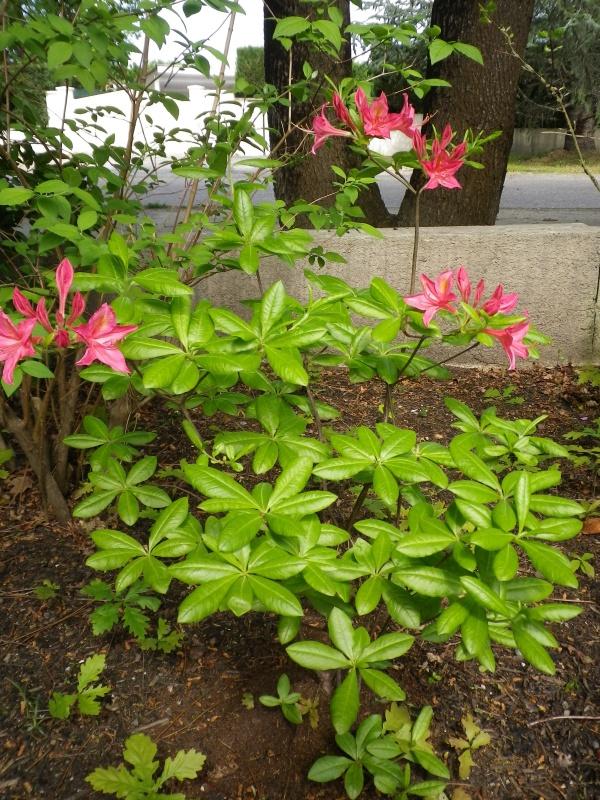 avril, jardin fébrile - Page 5 116909IMGP4332