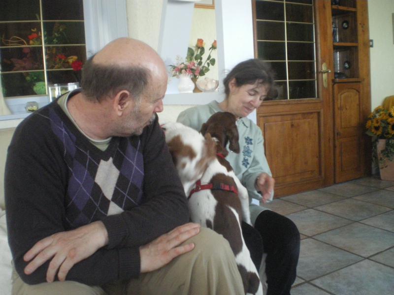 Deux mamies épagneules bretons, et leur famille dans le besoin 124435IMGP5248
