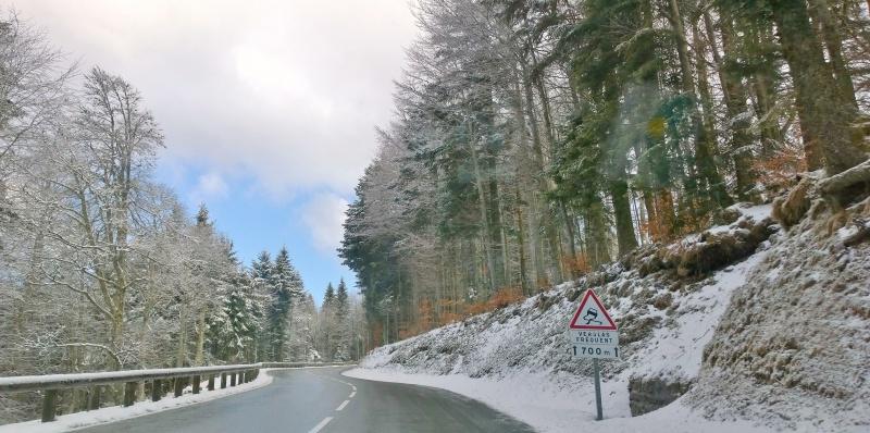 Week-end tourbières dans les Vosges 133387WP20150405101105Pro