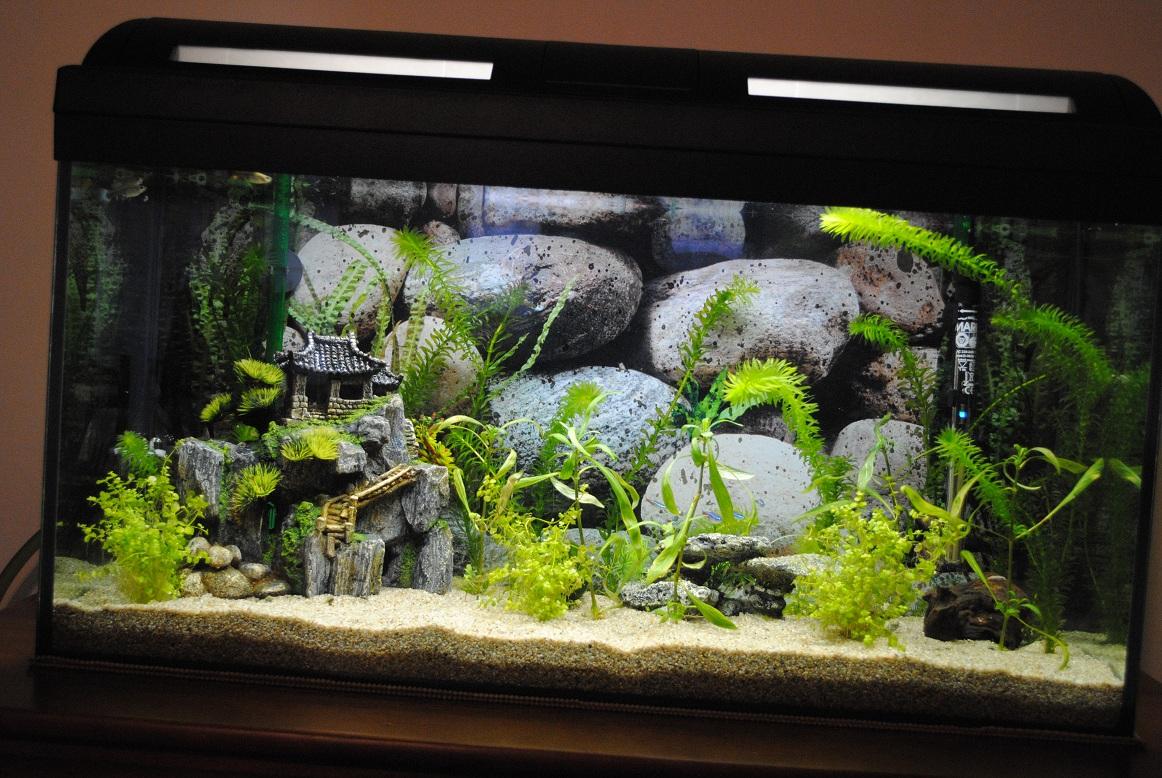 Mon premier aquarium 136057aquarium