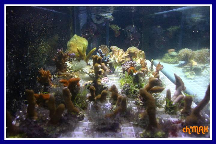 ce que j'amène en coraux a orchie  136061PXRIMG0004GF