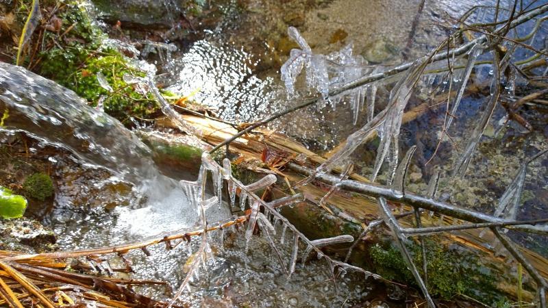Week-end tourbières dans les Vosges 138742WP20150406110704Pro