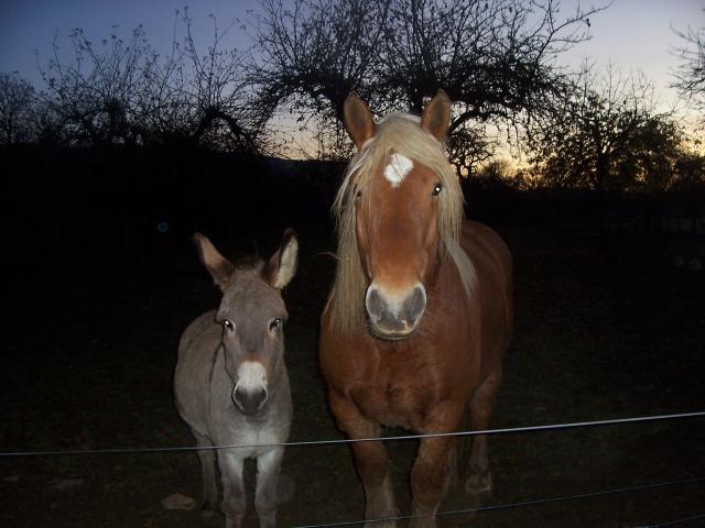 DIDOU - âne né en 2008  - adopté en mars 2011 par Comtois&co - Page 3 1391271001750