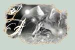 ~~ Destiny cat ~~ ( La guerre des clans ) 1395421618751547_chat_chasse__1_