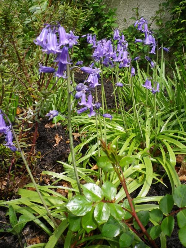 avril, jardin fébrile - Page 4 142838IMGP4048