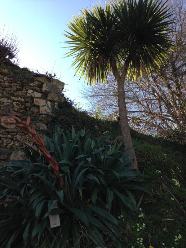 (40) Plantarium et chemin de ronde - Gaujacq 144186IMG0451