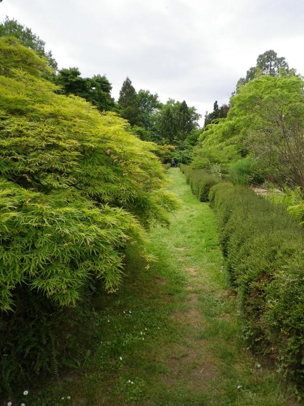 (40) Plantarium et chemin de ronde - Gaujacq - Page 2 149349IMGP4518