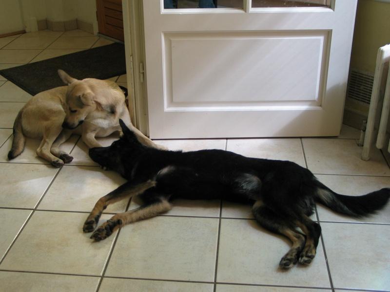 > Mika, un amour de petite chienne, née en mai 2011 - Adoptée 150655IMG9896