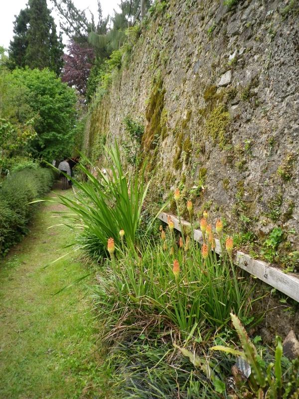 (40) Plantarium et chemin de ronde - Gaujacq - Page 2 154596IMGP4542