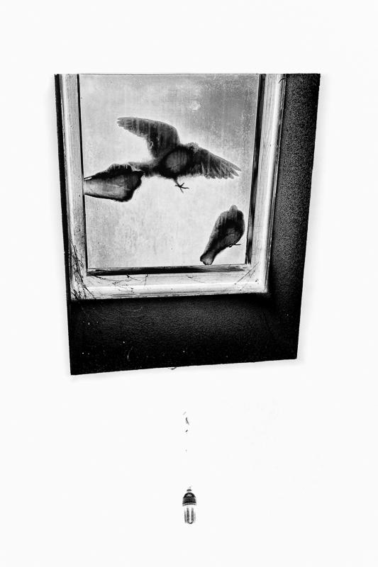 Three little birds + ajout 156283piafgris1