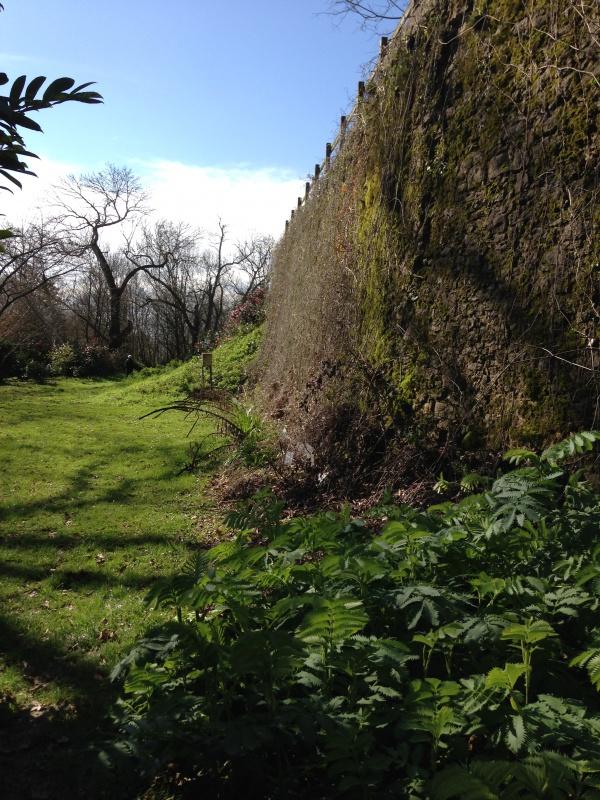 (40) Plantarium et chemin de ronde - Gaujacq 161453IMG0474