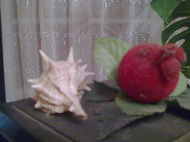 Compositions florales Marcelhorti 2010/2011 162936Photo001