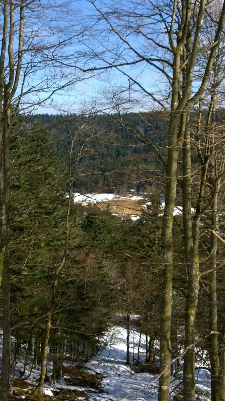 Week-end tourbières dans les Vosges 163447WP20150406104437Pro