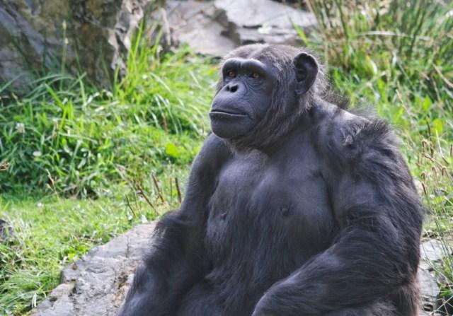 Zoo du Pal (Allier: Dompierre sur Besbre) 173506IMG_5851_DxO__640x480_