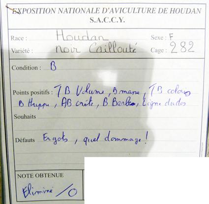 exposition d'aviculture Foire ST MATTHIEU 27 et 28 Septembre 2014 - Page 3 173899P1150597