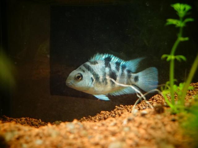 Ma Fish'étagère et les autres  - Page 6 176201DSC07087