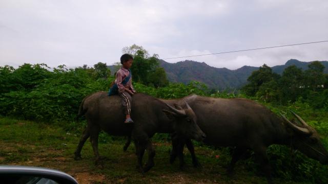 Tourisme historique à Dien Bien Phu 179537DSC9925