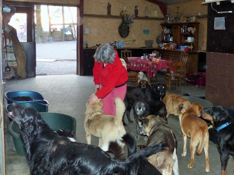 Pongo, chien des rues, né en 2009, très affectueux !! 182428P1080418