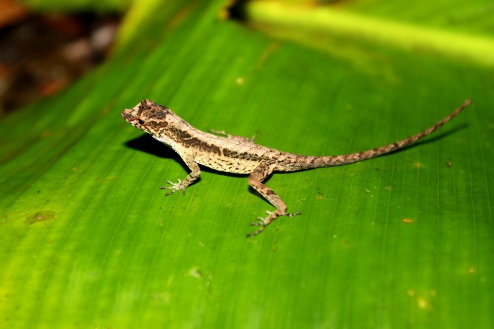 15 jours dans la jungle du Costa Rica 184211ano3r