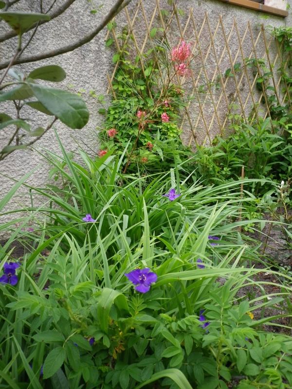 joli mois de mai, le jardin fait à son gré - Page 4 185794IMGP4605